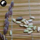 Buy Green Fragrant Rice Seeds 150pcs Plant Grain Oryza Sativa For Food Paddy