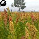 Buy Chinese Quinoa Seeds 100pcs Plant Grain Quinoa For Food Quinoa