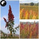 Buy Chinese Quinoa Seeds 200pcs Plant Grain Quinoa For Food Quinoa