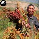 Buy Chinese Quinoa Seeds 400pcs Plant Grain Quinoa For Food Quinoa