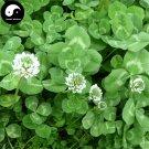 Buy Herb White Clover Seeds 1000pcs Plant Trifolium Repens For Forage Grass