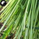 Buy Perennial Ryegrass Grass Seeds 500pcs Plant Evergreen Forage Grass Ryegrass
