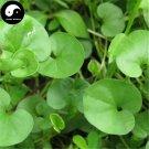 Buy Dichondra Repens Seeds 120pcs Plant Evergreen Grass Dichondra Repens