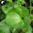 Buy Dichondra Repens Seeds 60pcs Plant Evergreen Grass Dichondra Repens