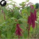 Buy Grain Amaranth Seeds 400pcs Plant Amaranthus Paniculatus Forage Grass