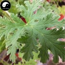 Buy Pelargonium Graveolens Seeds 100pcs Plant Herb Insect Repellent Grass