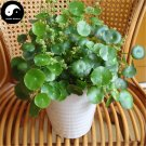 Buy Coins Grass Seeds 120pcs Water Plant Hydrocotyle Chinensis
