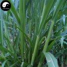 Buy Pennisetum Purpureum Seeds 500pcs Plant Forage Grass Sweet Pennisetum