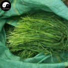 Buy Timothy Seeds 250pcs Plant Forage Grass Phleum Pratense