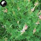 Buy Sainfoin Seeds 1000pcs Plant Forage Grass Red Bean Onobrychis Viciaefolia