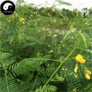Buy Sesbania Cannabin Seeds 1000pcs Plant Forage Grass Sesbania Tian Jing