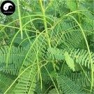 Buy Sesbania Cannabin Seeds 500pcs Plant Forage Grass Sesbania Tian Jing