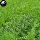 Buy Viciavillosa Seeds 500pcs Plant Forage Grass Viciavillosa Rothvar