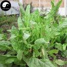 Buy Rumex Patientia Seeds 500pcs Plant Forage Grass Rumex