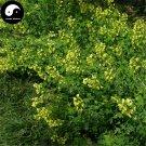 Buy Lotusc Orniculatus Seeds 1000pcs Plant Forage Grass Lotusc Orniculatus
