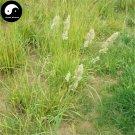 Buy Dactylis Glomerata Seeds 500pcs Plant Forage Grass Dactylis Ya Mao Cao