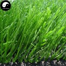 Buy Evergreen Grass Seeds 500pcs Plant Evergreen Garden Lawn Grass