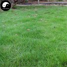 Buy Evergreen Zoysia Japonica Grass Seeds 500pcs Plant Manilagrass Lawn Grass