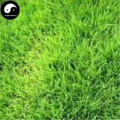 Buy Evergreen Soft Manilagrass Seeds 500pcs Plant Lawn Grass Zoysia Japonica