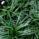 Buy Evergreen Grass Seeds 200pcs Plant Low Ophiopogon Japonicus Lawn Grass