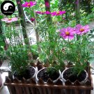 Buy Cosmos Bipinnata Flower Seeds 200pcs Plant Cosmos Flower For Family Garden
