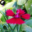 Buy Multicolored Carnation Flower Seeds 100pcs Plant Dianthus Barbatus Flower