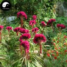 Buy Cockscomb Flower Seeds 600pcs Plant Garden Celosia Cristata Flowers