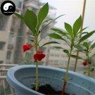 Buy Impatiens Balsamina Flower Seeds 120pcs Plant Impatiens Balsamine Flowers