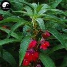 Buy Impatiens Balsamina Flower Seeds 60pcs Plant Impatiens Balsamine Flowers