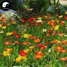 Buy Field Poppy Flower Seeds 400pcs Plant Papaver Rhoeas Flowers Flanders Poppy
