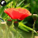 Buy Field Poppy Flower Seeds 200pcs Plant Papaver Rhoeas Flowers Flanders Poppy