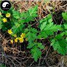 Buy Chinese Camomile Flower Seeds 200pcs Plant Wild Herb Flowers Chrysanthemum