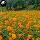 Buy Cosmos Sulphureus Flower Seeds 200pcs Plant Flowers Chrysanthemum Garden