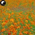 Buy Cosmos Sulphureus Flower Seeds 400pcs Plant Flowers Chrysanthemum Garden