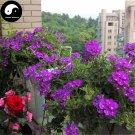 Buy Verbena Hybrida Flower Seeds 400pcs Plant Chinese Verbena Flower Garden