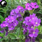 Buy Verbena Hybrida Flower Seeds 100pcs Plant Chinese Verbena Flower Garden