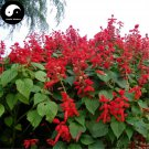 Buy Salvia Spendens Flower Seeds 100pcs Plant Chinese Red Flower Tropical Sage