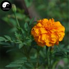 Buy Tagetes Patula Flower Seeds 60pcs Plant Garden Flower Tagetes Patula