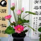 Buy Chinese Bowl Lotus Flower Seeds 80pcs Water Plant Flower Lotus