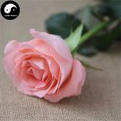 Buy Chinese Rose Tree Seeds 200pcs Plant Flower Pink Rosa Rugosa