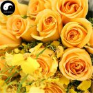 Buy Chinese Rose Tree Seeds 400pcs Plant Flower Yellow Rosa Rugosa