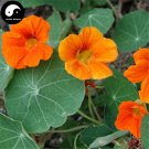 Buy Chinese Nasturtium Flower Seeds 60pcs Plant Flower Tropaeolum Majus