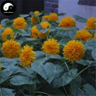 Buy Helianthus Annuus Flower Seeds 100pcs Plant Chinese Sunflower Helianthus