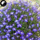 Buy Lobelia Erinus Flower Seeds 400pcs Plant Blue Flower Garden Lobelia Bonsai