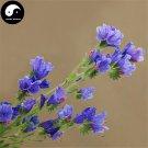 Buy Echium Vulgare Flower Seeds 200pcs Plant Blue Flower Garden Echium