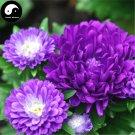 Buy Callistephus Flower Seeds 200pcs Plant Flower Garden Callistephus Chinensis