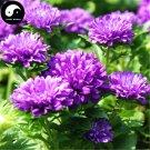 Buy Callistephus Flower Seeds 400pcs Plant Flower Garden Callistephus Chinensis