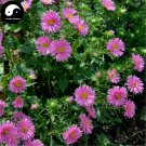 Buy Pink Callistephus Flower Seeds 400pcs Plant Flower Callistephus Chinensis