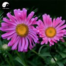Buy Pink Callistephus Flower Seeds 200pcs Plant Flower Callistephus Chinensis