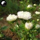 Buy White Callistephus Flower Seeds 200pcs Plant Flower Callistephus Chinensis